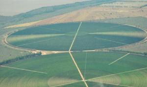 ブラジル農園