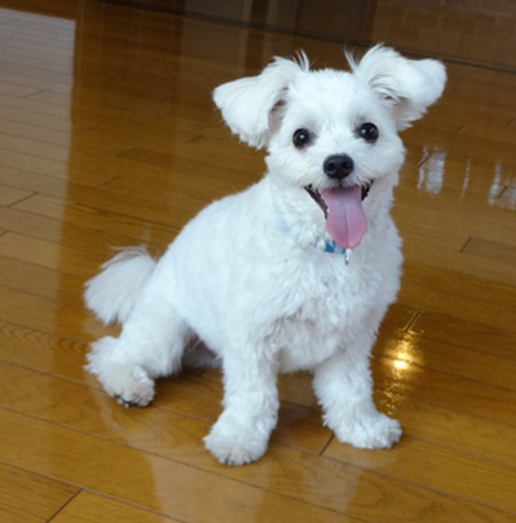 愛犬の床 ジューテックホーム